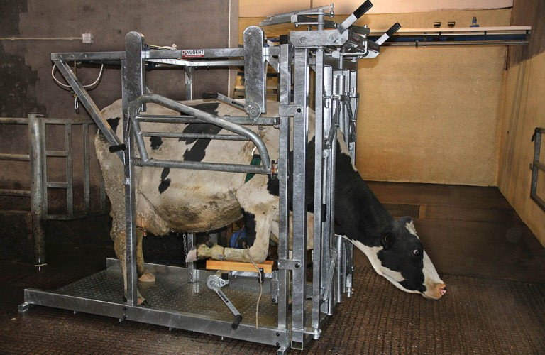 NUGENT UNIVERSAL HOOF TECH 2 Wexford Carlow and Wicklow